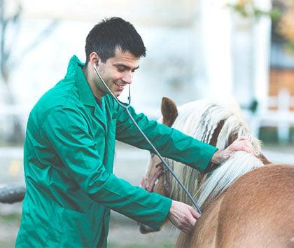 veterinaire-cheval-soigner